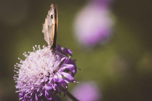 butterfly flower blossom