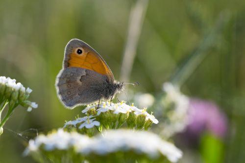 butterfly flower butterfly wings