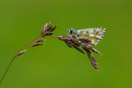 butterfly nature butterflies