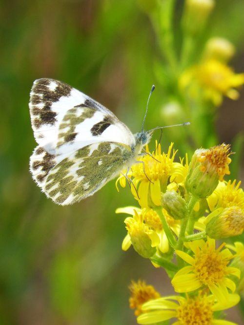 butterfly flower libar