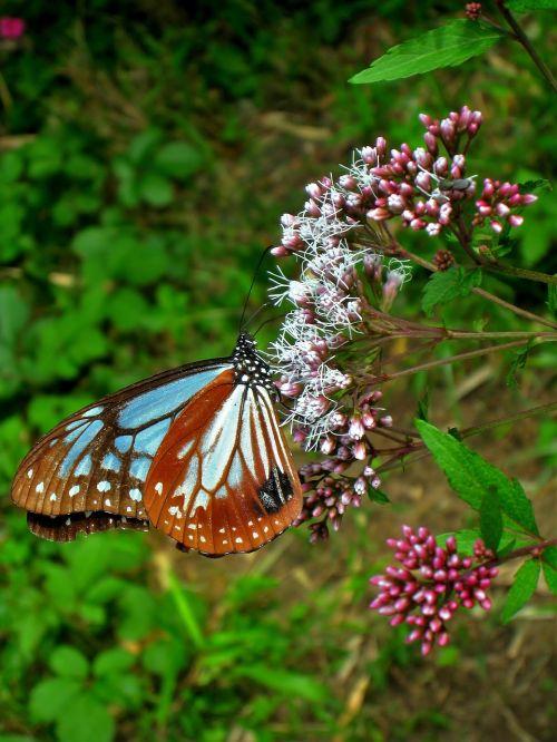 butterfly flowers blue sky