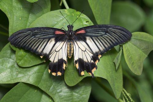 butterfly butterfly garden wings