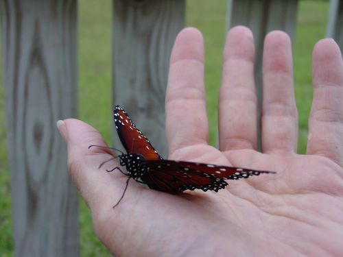 butterfly hold hand