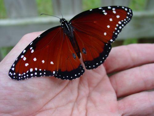 butterfly hand garden