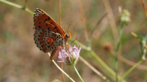 butterfly,macro,nature,provence