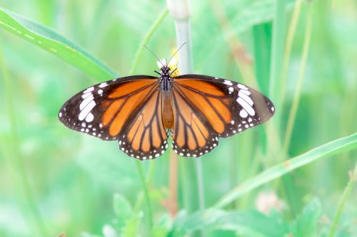 butterfly worms love the tiger nature