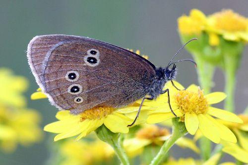 butterfly close mac