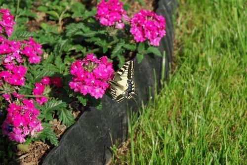 butterfly flowers green
