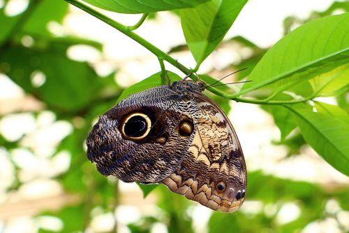 drugelis,gamta,vabzdžiai,mariposa