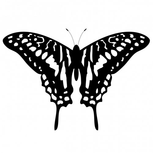 butterfly,animal,insect,art,beautiful,tattoo,shape,design,pattern,black,white,scrapbooking symbol,elements