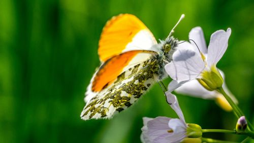 butterfly,plant,insect,nature,flower,color,animal,beautiful,blossom,bloom,close,yellow,colorful,public record,edelfalter,wild flowers,spring