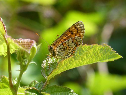 butterfly detail beauty