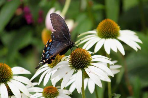 butterfly moth wing