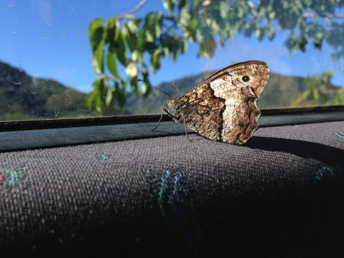 butterfly auto outlook