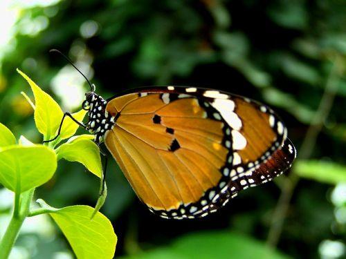butterfly green summer day