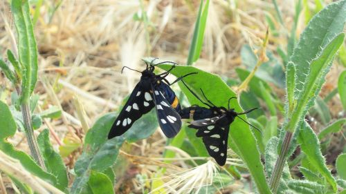 butterfly pairing pair
