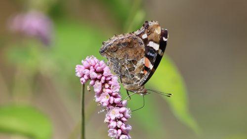 butterfly riverside summer