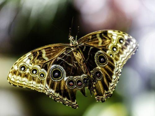 butterfly las vegas bellagio