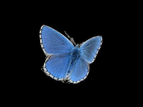 butterfly blue blue butterfly