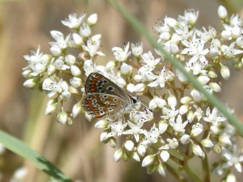butterfly wild flower libar