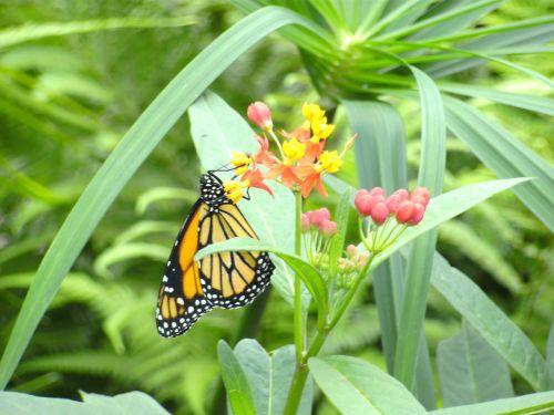 butterfly butterfly garden bl