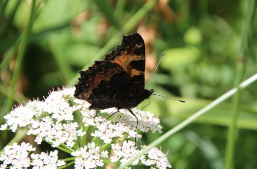 butterfly public record