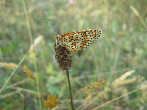 butterfly,wild,insect,nature,summer,animal,green,wildlife