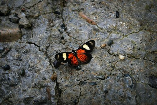butterfly stone nature