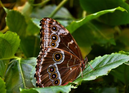 butterfly brown public record