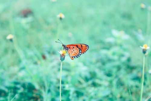 butterfly wild insects