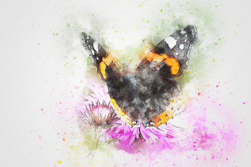 butterfly animal insect