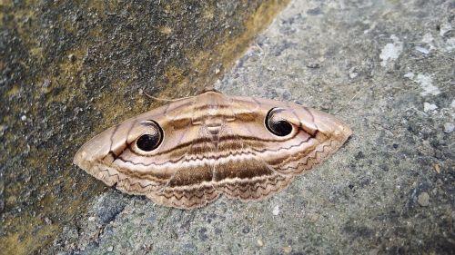 butterfly eye strange