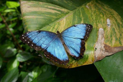 butterfly flower foliage