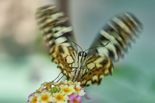butterfly wing beat nature