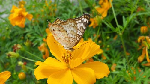 butterfly braun wings yellow