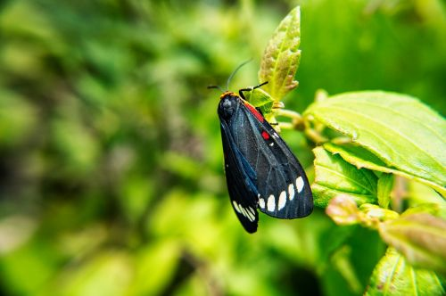 butterfly moth insects