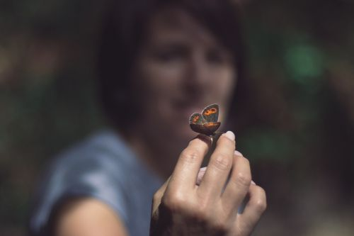 butterfly hand insect