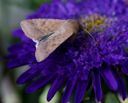 butterfly flower mov