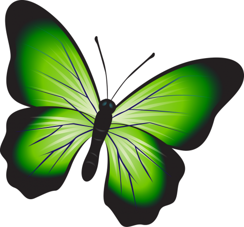 butterfly colorful green
