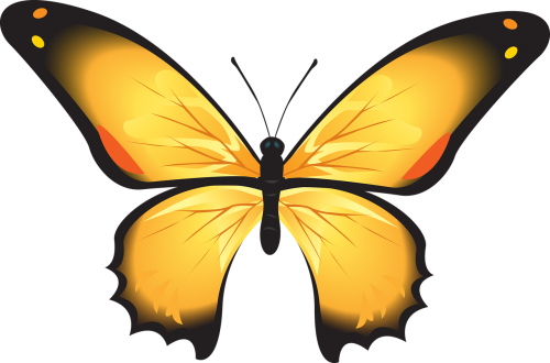 butterfly colorful yellow