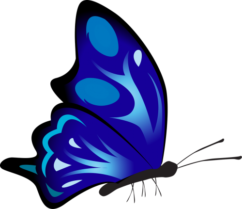 butterfly colorful blue