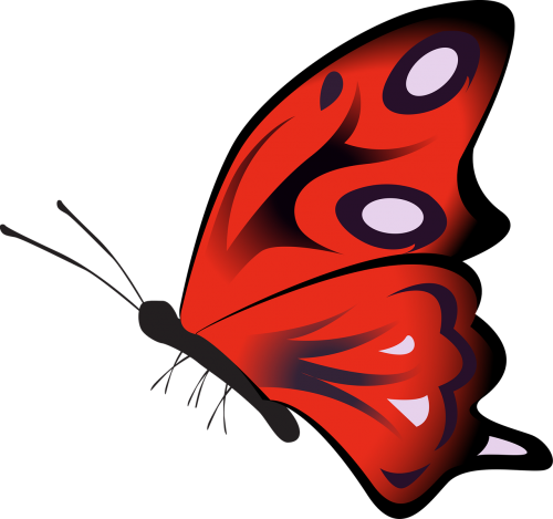 butterfly colorful red