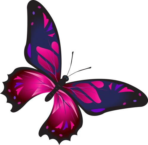 butterfly colorful pink