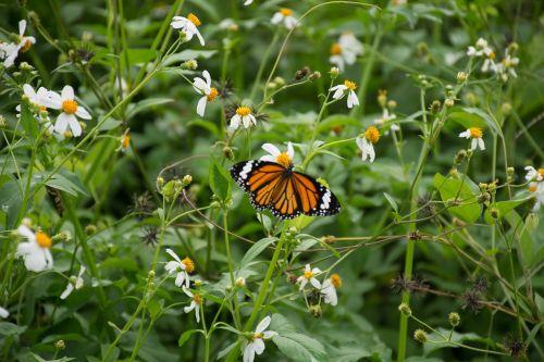 butterfly flowers bokeh