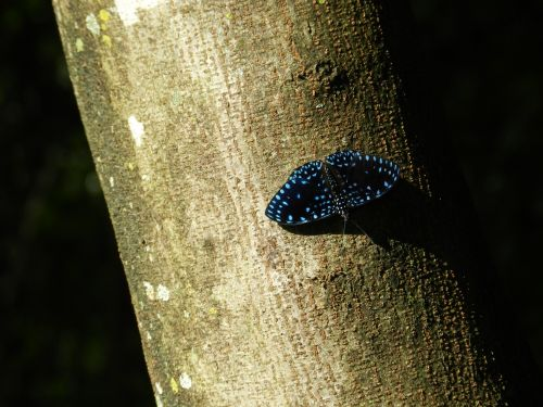 butterfly blue colorful butterfly