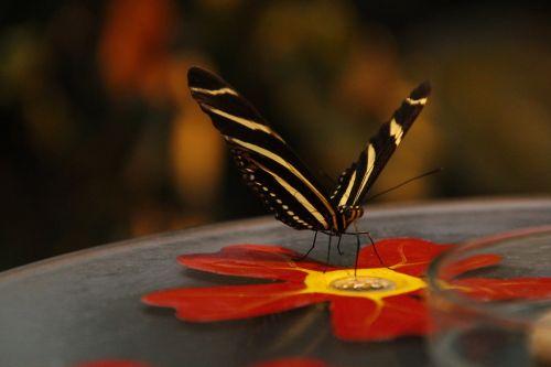 butterfly autumn edelfalter