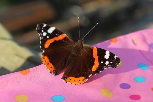 butterfly istanbul turkey