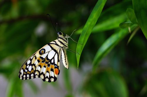 butterfly insert nature