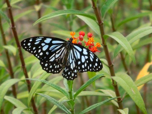 butterfly adopt honey beautiful port