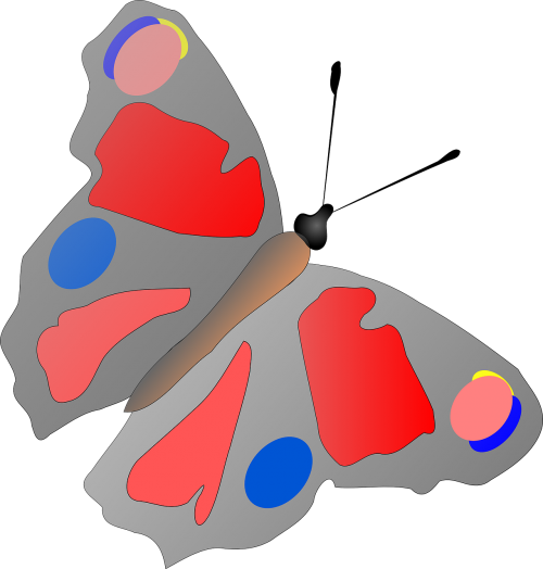 butterfly insect multicolored